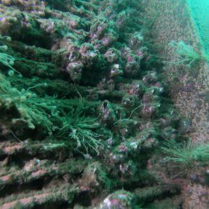 Caixa de Mar Antes da Limpeza